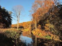 Złoci jesieni drzewa zbliżają rzekę, Lithuania Obrazy Royalty Free
