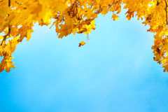 Złoci, kolor żółty i pomarańcze liście, Obrazy Stock