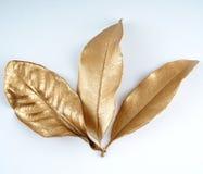 Złoci liścia projekta elementy Dekoracja elementy dla zaproszenia, ślubne karty, valentines dzień, kartka z pozdrowieniami odosob Obrazy Royalty Free