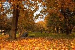 Złoci liście na gałąź, jesieni drewno z słońce promieniami Zdjęcie Royalty Free