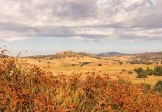 Złoci pola, gryka, dęby, grzmią podeszczowe chmury Obrazy Royalty Free