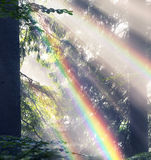 Złoci promienie świerkowy las Obrazy Stock