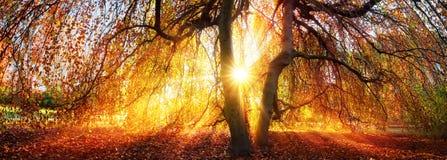 Złoci promienie jesieni słońce obraz royalty free