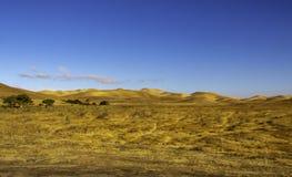 Złoci wzgórza z doliną zieleni drzewa obrazy royalty free