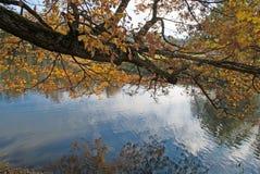 Złocista jesień; drzewa zbliżają staw Obraz Stock