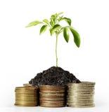 Złociste monety i roślina Zdjęcie Royalty Free