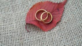 Złociste obrączki ślubne obraca z jesień liściem zbiory