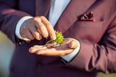 Złociste obrączki ślubne z spiny zielonym kasztanem w rękach panna młoda w purpurowym kostiumu obrazy royalty free