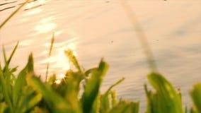 Złocisty światło słoneczne na wodnej powierzchni zbiory