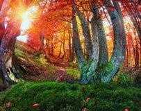 Złocisty bukowy las Obrazy Stock