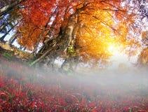 Złocisty bukowy las Zdjęcie Stock