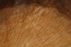 Złocisty Dębowy przekrój poprzeczny Z Ciemną Horyzontalną linią Zdjęcie Stock