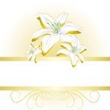 Złocisty elegancki sztandaru tło z lilium kwiatami Obraz Royalty Free