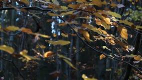 Złocisty kolorowy jesień urlop na gałąź zbiory wideo