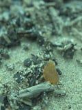 złocisty morze bałtyckie Zdjęcia Royalty Free