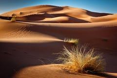 Złocisty piasek i niebieskie niebo Fotografia Stock