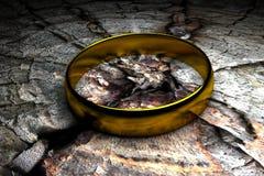 złocisty pierścionek Fotografia Stock