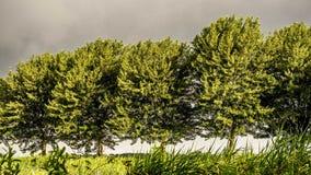 Złocisty zimy słońce na opóźnionej jesieni zieleni opuszcza nadciągającego burzowego ustawianie Obrazy Stock