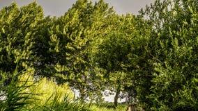 Złocisty zimy słońce na zielonych opóźnionych jesieni drzew burzowym ustawianiu Obrazy Stock