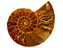 Złota ślimakowata tekstura wśrodku amonit skorupy Fotografia Royalty Free