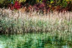 Złota bagno trawa z idyllicznym jeziorem i spadek barwimy lasy za zdjęcie royalty free