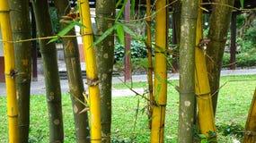 Złota bambusowa tło ilustracja zdjęcie stock