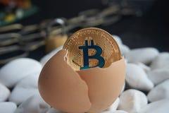 Złota bitcoin moneta w łamanym eggshell Zdjęcie Royalty Free