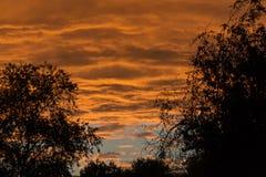 Złota godzina, kolorowe chmury i czarne sylwetki drzewa, słońce zdjęcia royalty free