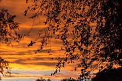 Złota godzina, kolorowe chmury i czarne sylwetki drzewa, słońce obraz stock