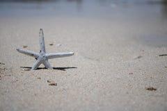 Złota i Biała rozgwiazda na złotej piaskowatej plaży obraz stock
