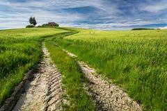 Złota i zieleni pola w dolinie przy zmierzchem, Tuscany Obraz Royalty Free