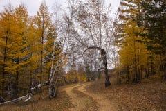 Złota jesień, ścieżka w lesie Zdjęcia Stock