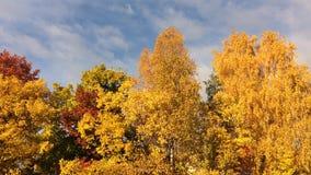 Złota jesień zbiory