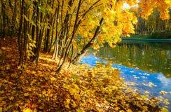 Złota jesień Zdjęcia Royalty Free