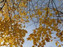 Złota jesień Obraz Royalty Free