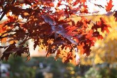 Złota jesień fotografia stock