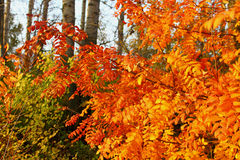 Złota jesień Fotografia Royalty Free