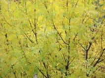 Złota jesień Zdjęcia Stock