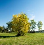 Złota jesień Zdjęcie Royalty Free