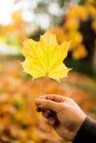 Złota jesień, czerwoni liście Spadek, sezonowa natura, piękny ulistnienie Obrazy Stock