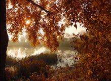 Złota jesień i słońce Obrazy Royalty Free