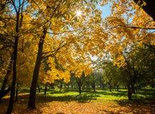 Złota jesień na słonecznym dniu obrazy stock