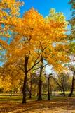 Złota jesień na słonecznym dniu obrazy royalty free