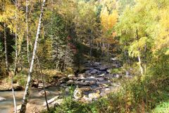Złota jesień w Altai regionie w Rosja Piękny krajobraz - droga w jesień lesie obraz royalty free