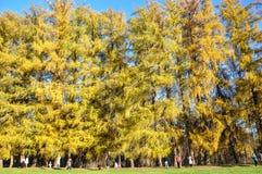 Złota jesień w Arkhangelsk, Moskwa, Rosja fotografia stock