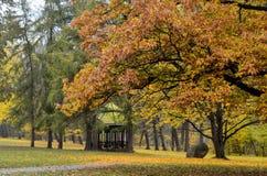 Złota jesień w parku obrazy stock