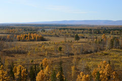 Złota jesień w Wschodnim Syberia krajobrazu wiejskiego Obrazy Stock