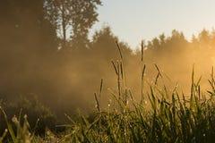 Złota mgła na polu zdjęcia stock