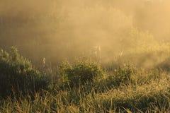 Złota mgła na polu zdjęcie royalty free