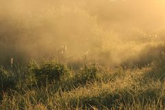 Złota mgła na polu obrazy royalty free